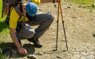 Diventa un volontario #iononhopauradellupo per il monitoraggio del lupo