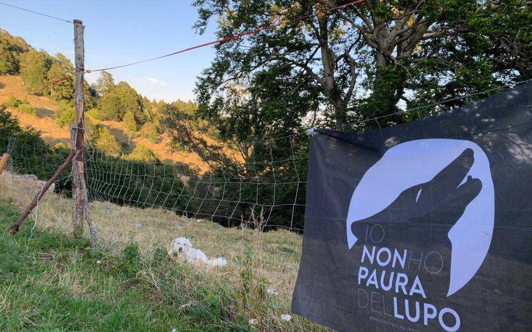 Storie di lupi e pastori in Lessinia – 3 Agosto 2019