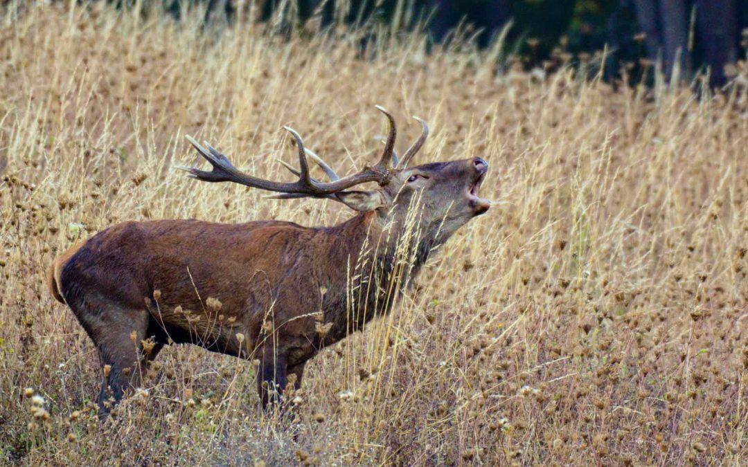 Workshop: Il bramito del Cervo in Val Taro – Settembre 2019