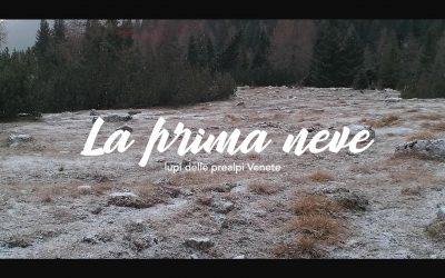 Lupi del Veneto e la prima neve d'autunno…