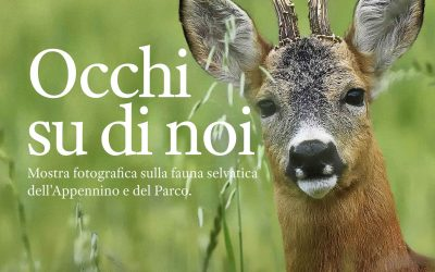 """""""Occhi su di noi"""" Mostra Fotografica sulla Fauna selvatica dell'Appennino e del Parco dell'Aveto"""
