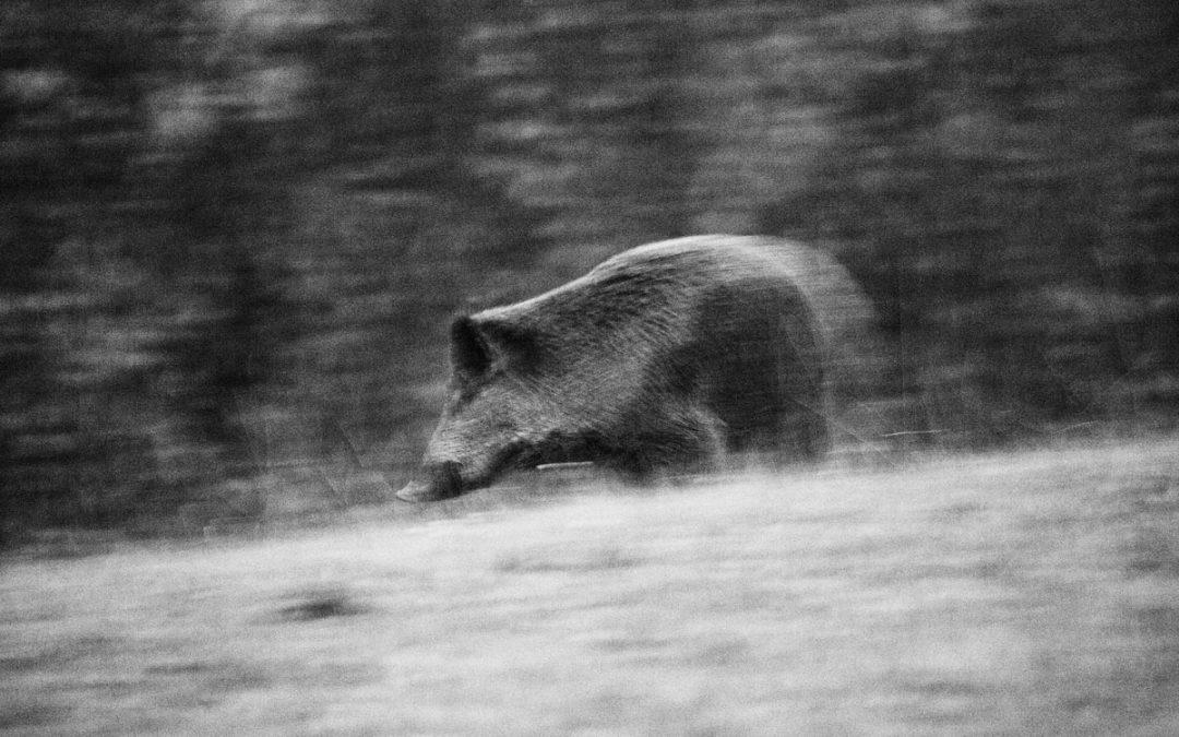 8 motivi per comprendere come la riduzione del Parco Naturale Regionale della Lessinia sia inutile e dannosa