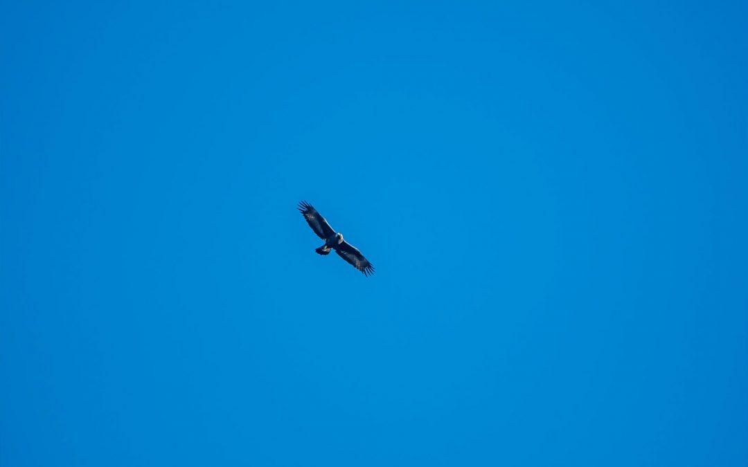 Il volo dell'aquila il cammino del lupo – Escursione didattica