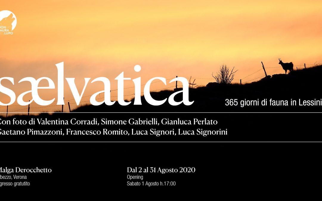 Mostra fotografica: Sælvatica – 365 giorni di fauna in Lessinia