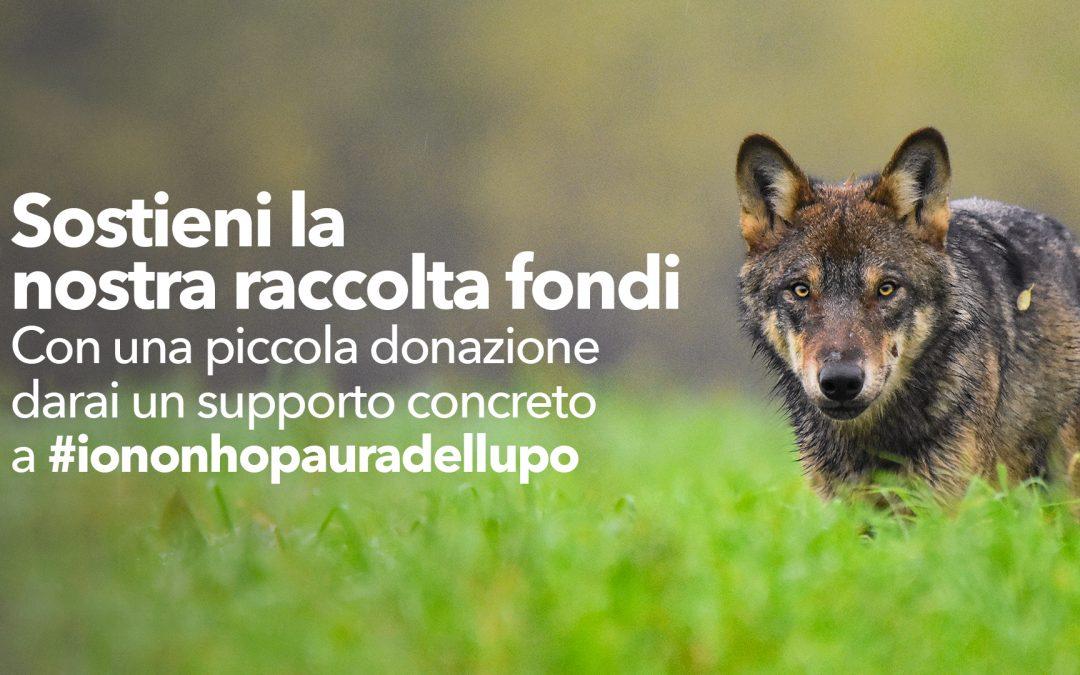 """L'Associazione """"Io non ho paura del lupo"""" risponde ai tanti furti subiti e lancia una raccolta fondi."""