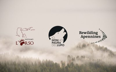 """I'm not afraid of the wolf"", ""Let's save the bear"" and ""Rewilding Apennines"" together for wildness"