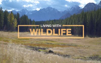 """Living with Wildlife: guarda ora uno dei documentari de """"Il festival di #iononhopauradellupo"""""""